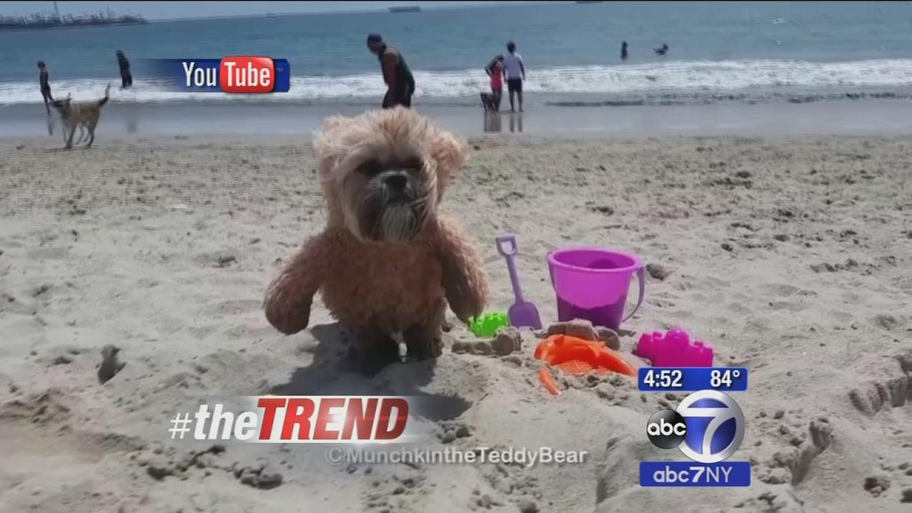 The Trend: The may be THE cutest dog ever