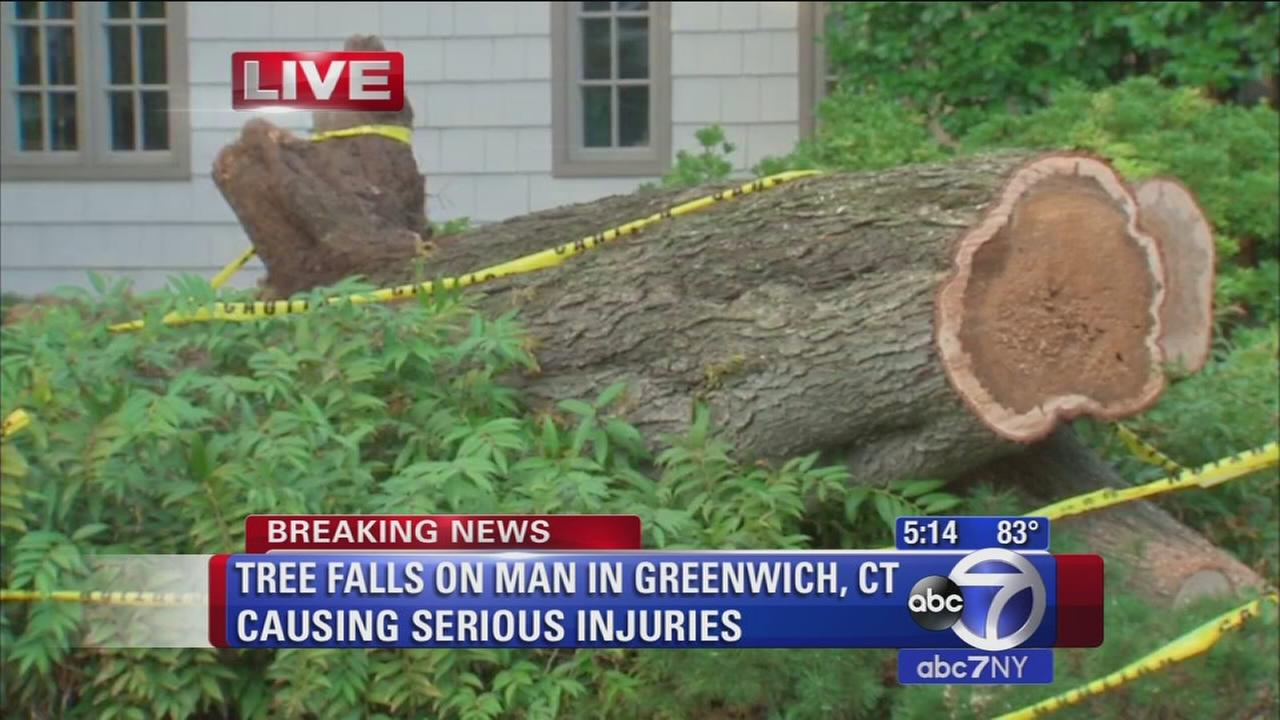 Man injured by massive falling tree in Old Greenwich