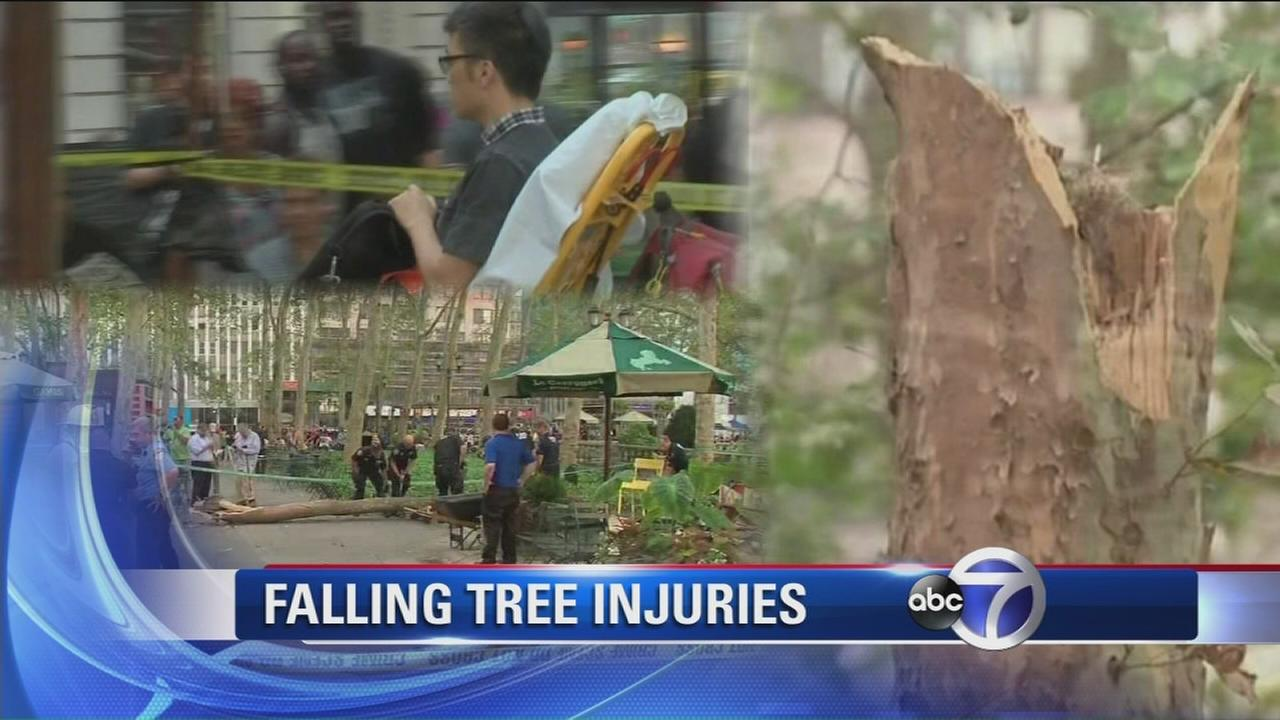 Tree falls onto five people in Bryant Park
