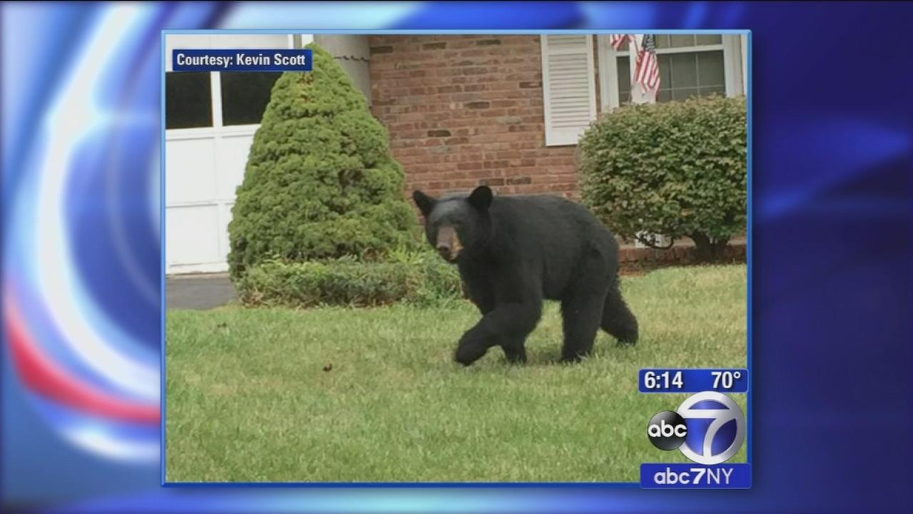 Wayne residents on edge after black bear sightings