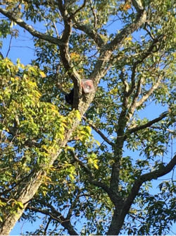 <div class='meta'><div class='origin-logo' data-origin='none'></div><span class='caption-text' data-credit='Photo/WABC'>A bear cub got its head stuck in a cookie jar and had to be rescued from a tree in Ringwood, N.J.</span></div>