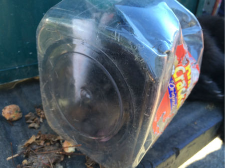 A bear cub got its head stuck in a cookie jar and had to be rescued from a tree in Ringwood, N.J. <span class=meta>Photo/WABC</span>