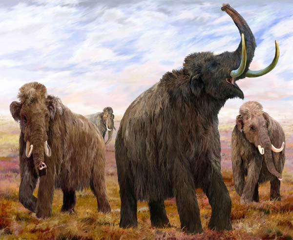 Mummified mammoth Lyuba is getting a lot of attention in London, but the baby woolly mammoth got her start in Chicago.  <span class=meta>(Photo&#47;The Field Museum)</span>