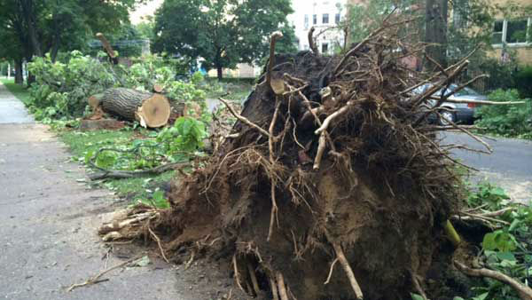 <div class='meta'><div class='origin-logo' data-origin='~ORIGIN~'></div><span class='caption-text' data-credit='WLS Photo/ Victoria Blount'>Fallen trees lined streets in Chicago's Andersonville neighborhood the morning affter a day of severe weather.</span></div>