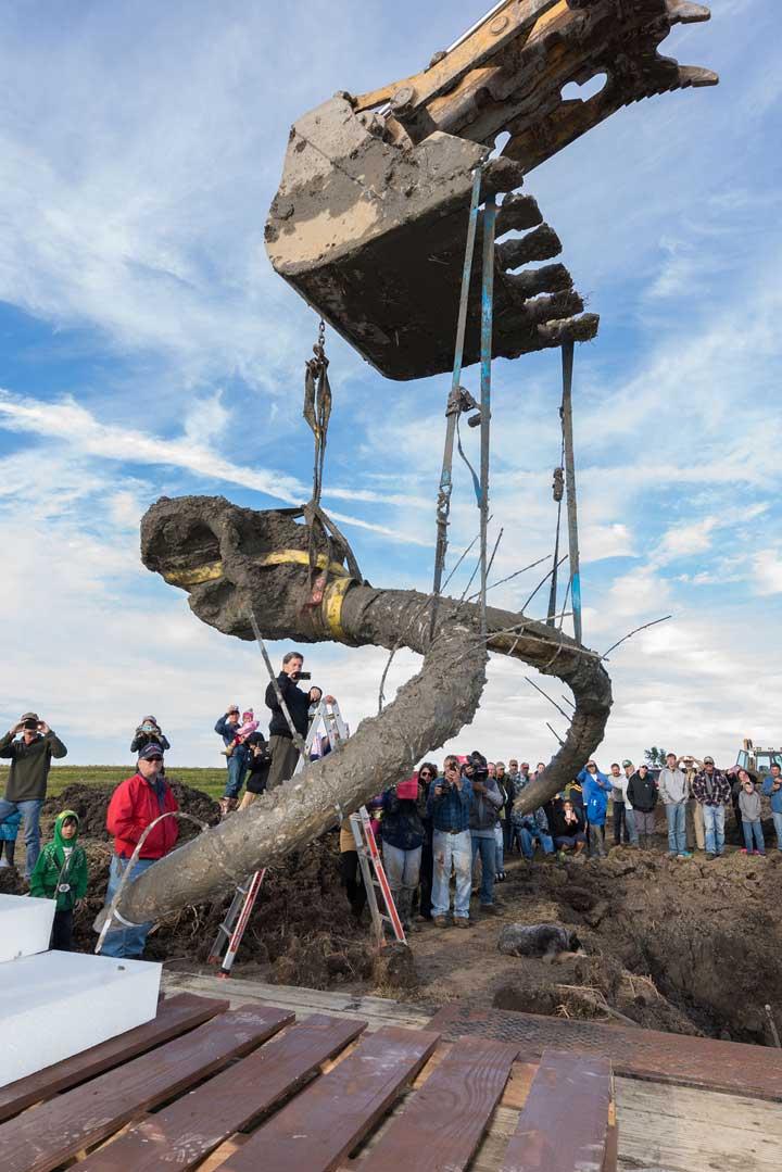 Woolly Mammoth Found In Michigan Field By Farmer