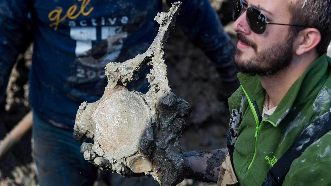 U-M Ph.D. candidate Joe El-Adli holding one of the mammoth vertebrae recovered during Thursdays dig.