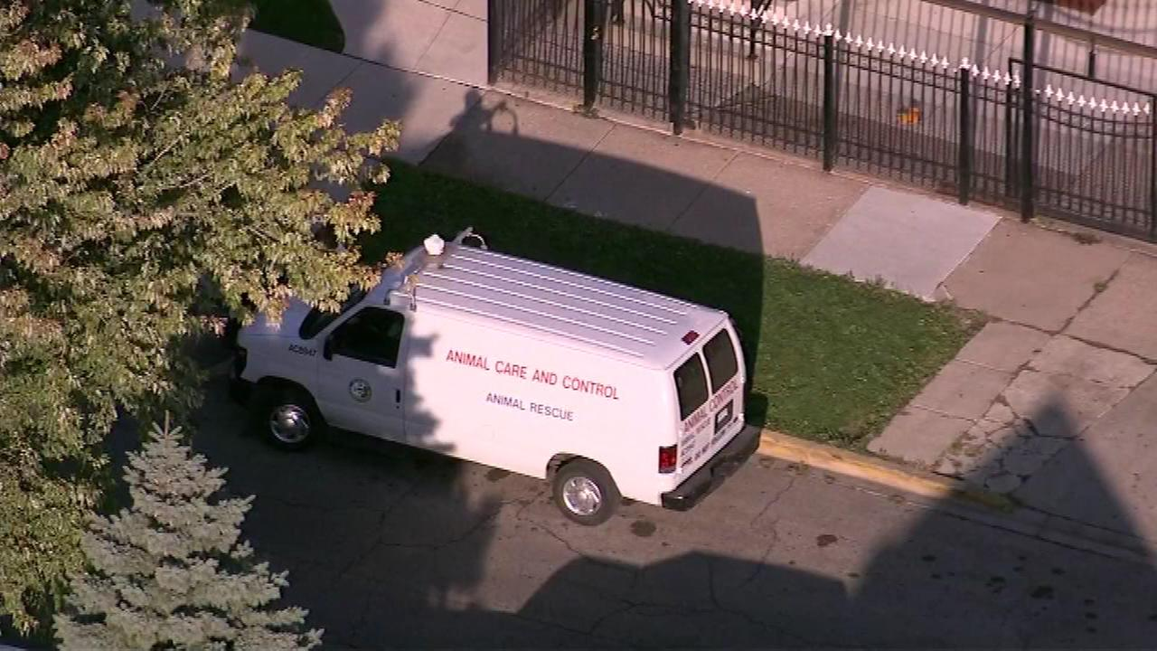 A dog attacked two people near 51st and Fairfield in the Gage Park neighborhood on Chicagos Southwest Side.
