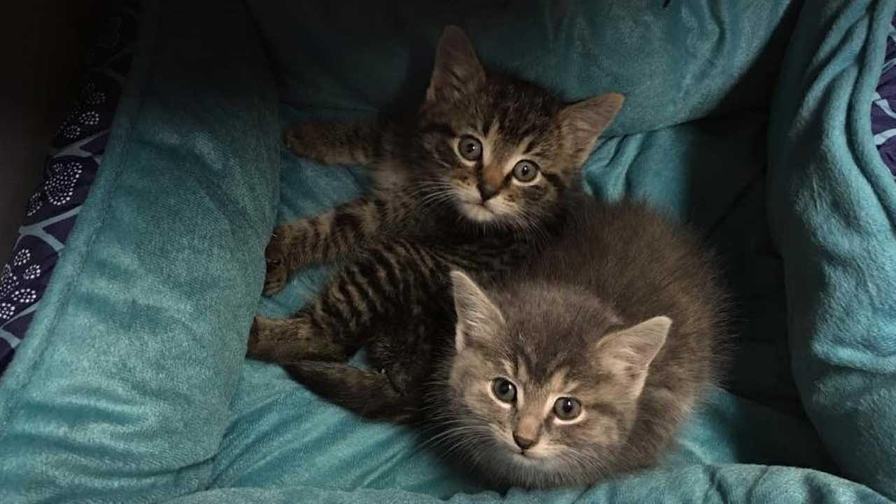 Piper and Josh, rescued from a drain pipe in Portage, Ind.