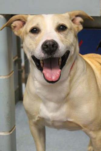 <div class='meta'><div class='origin-logo' data-origin='none'></div><span class='caption-text' data-credit='Anti-Cruelty Society'>Mistic. Female/Spayed. Retriever, Labrador/Mix. 8 years</span></div>