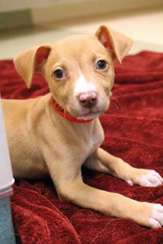 <div class='meta'><div class='origin-logo' data-origin='none'></div><span class='caption-text' data-credit='Anti-Cruelty Society'>Vixen. Female. Retriever/Mix. 2 months.</span></div>