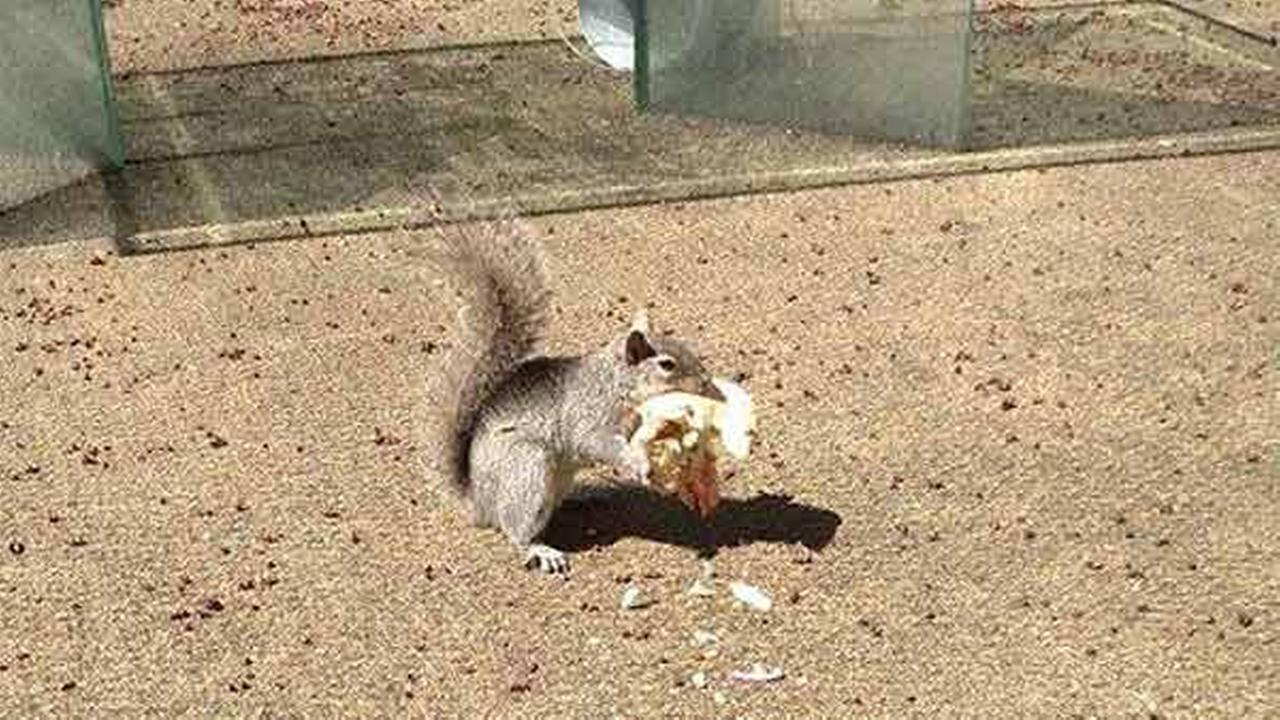 Squirrels go nuts for sandwiches, too. Sheena Battles