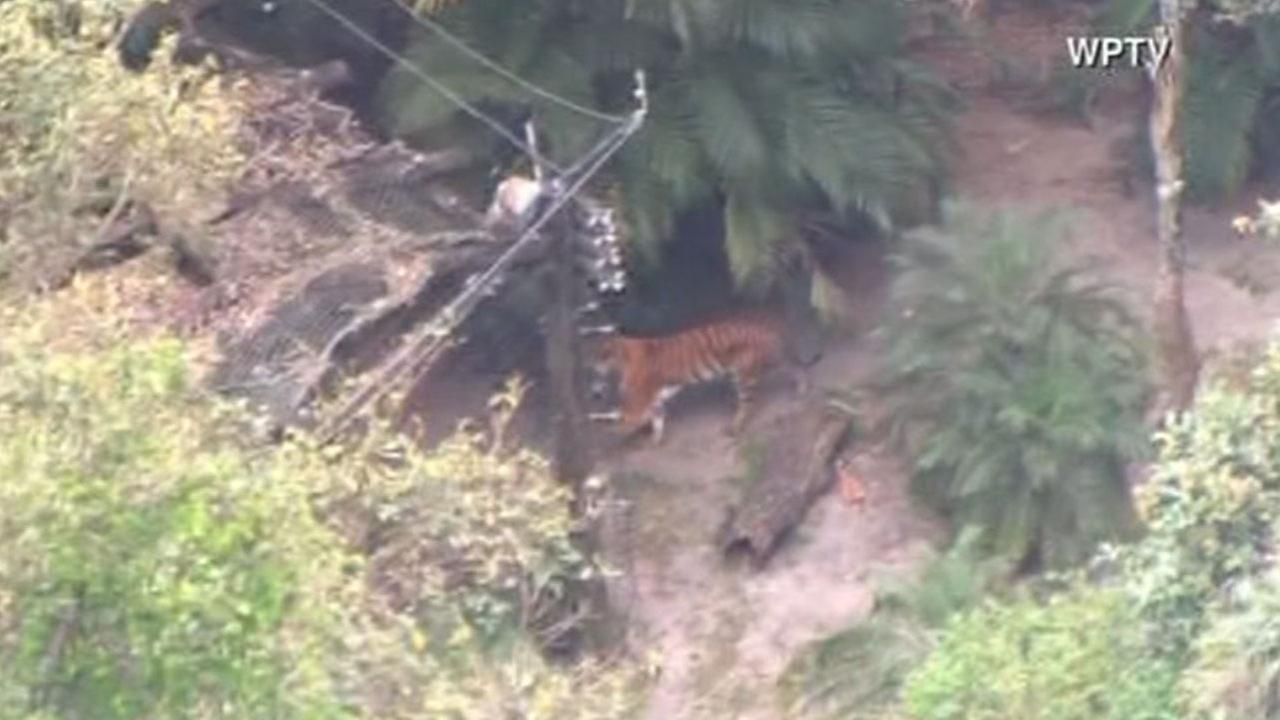A zoo worker has died after a tiger attack at the Palm Beach Zoo.