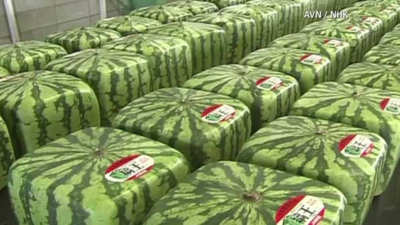 Japan 39 s square watermelons gain popularity - Square watermelons how and why ...