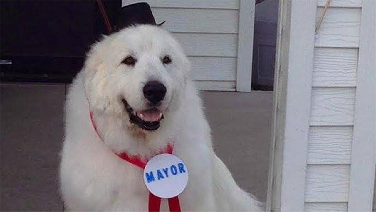 Duke, the dog mayor of Cormorant, Minn.