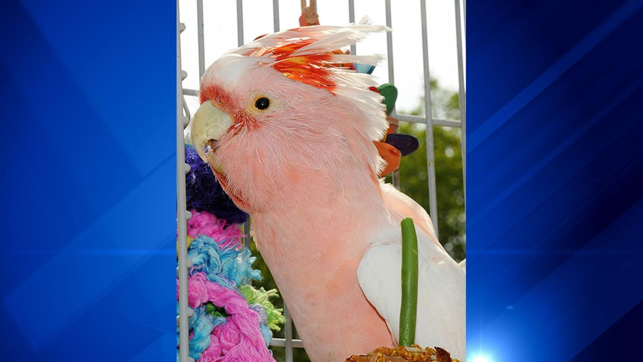 Cookie the cockatoo dies at 83