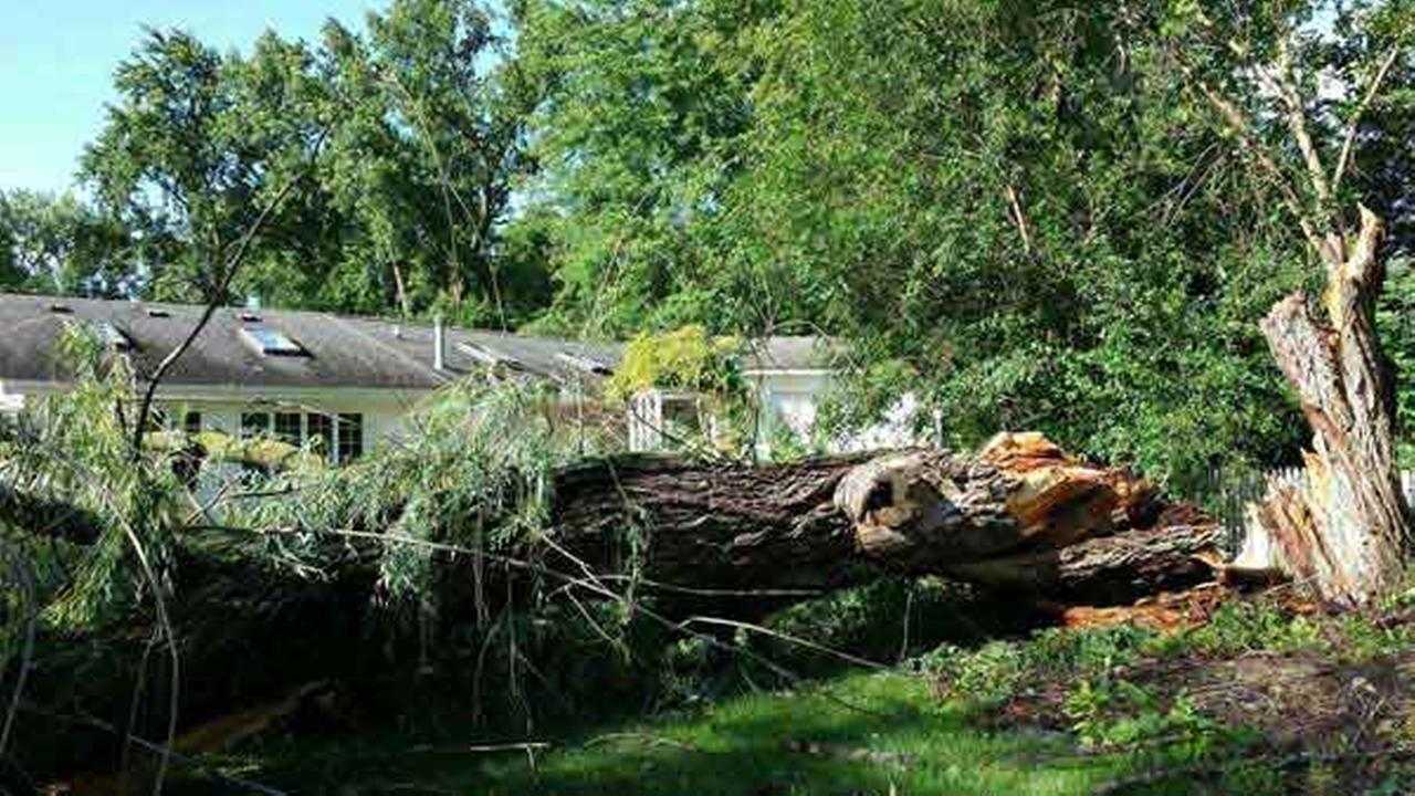 A fallen tree knocked down power lines in Flossmoor.