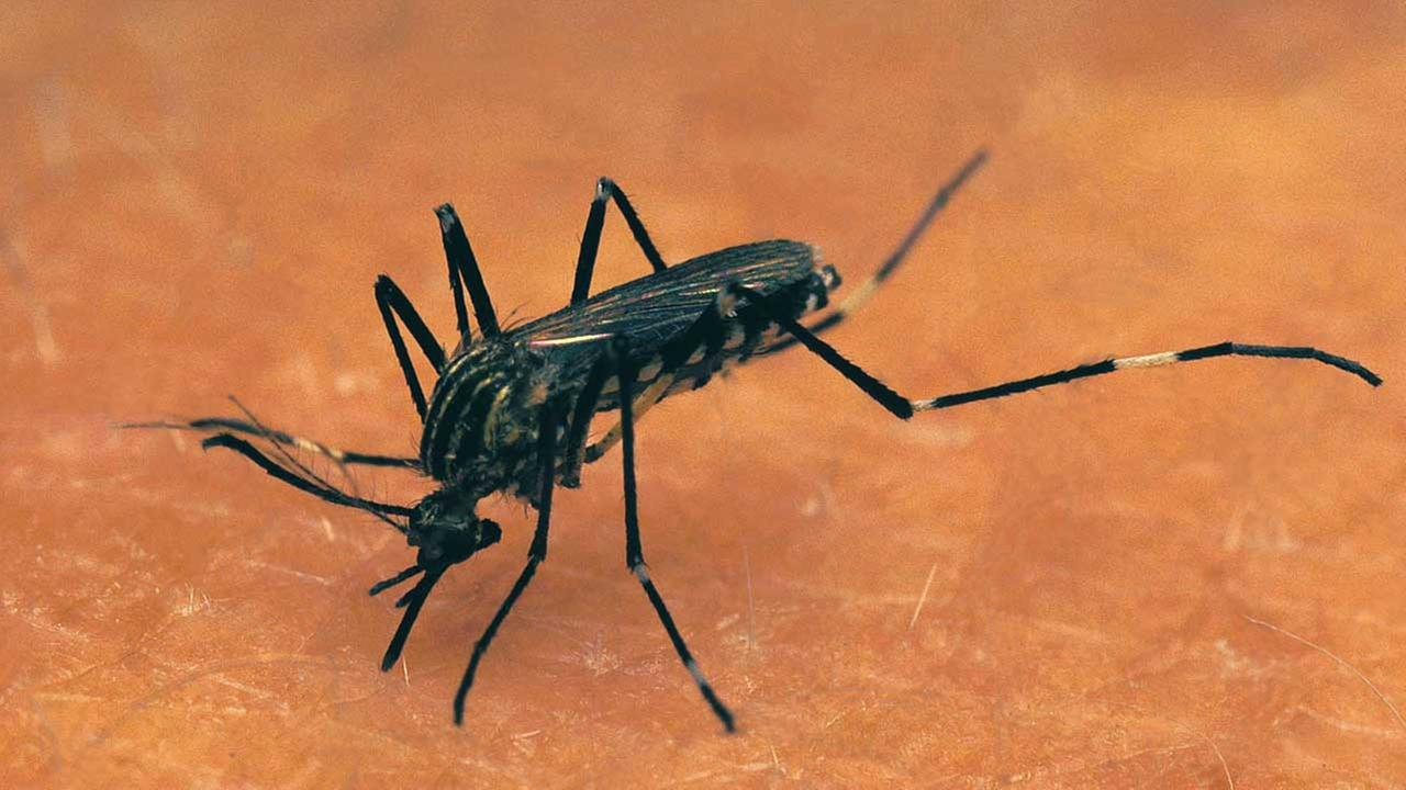 Tire removal in Illinois to target virus-carrying mosquitoes