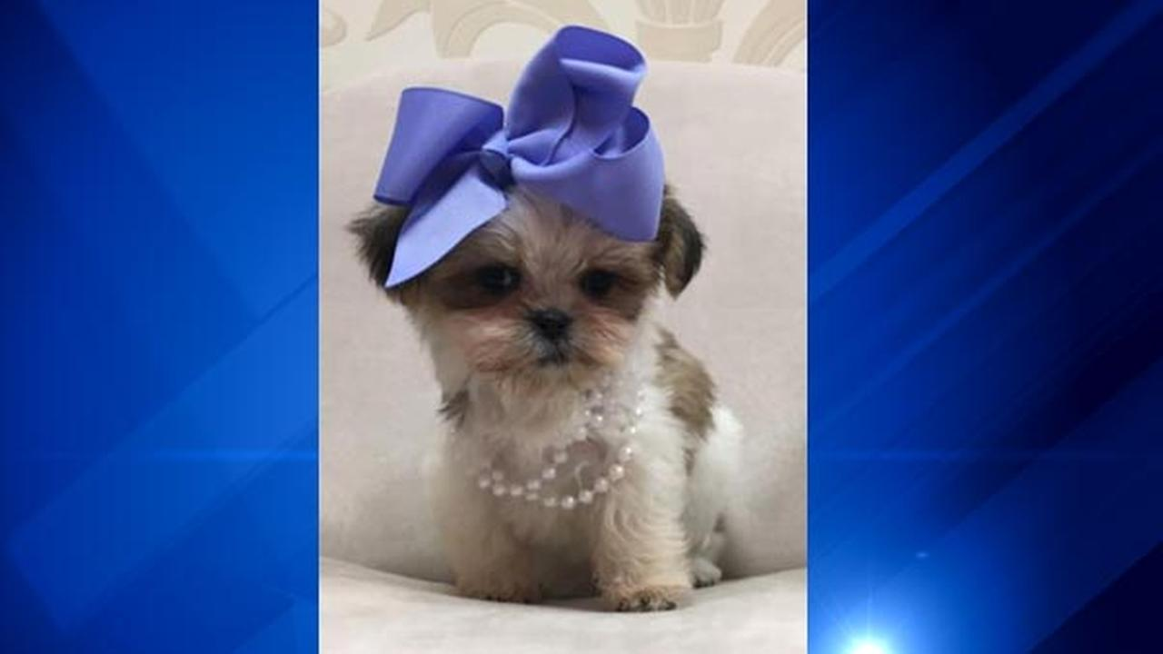 Puppy stolen from Joliet pet store worth thousands