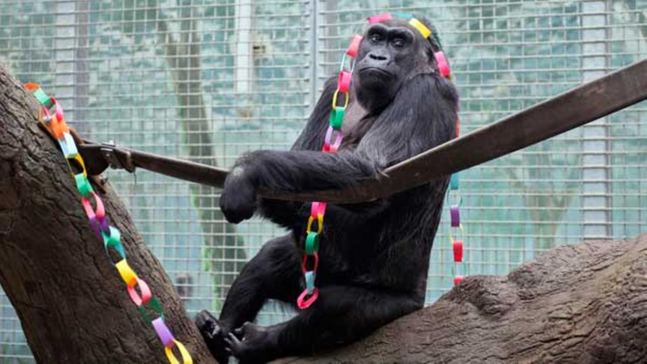Colo on her 58th birthday in December 2012, provided by the Columbus Zoo and Aquarium.