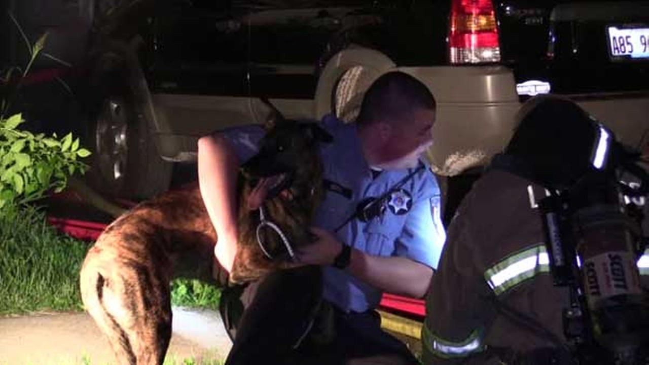 Dog, 2 cats rescued from house fire in Villa Park
