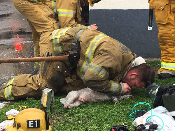 <div class='meta'><div class='origin-logo' data-origin='none'></div><span class='caption-text' data-credit='@billy_fernando/Instagram'>California firefighters who spent 20 minutes performing mouth-to-snout resuscitation on a dog they rescued from a burning apartment are being hailed as heroes.</span></div>