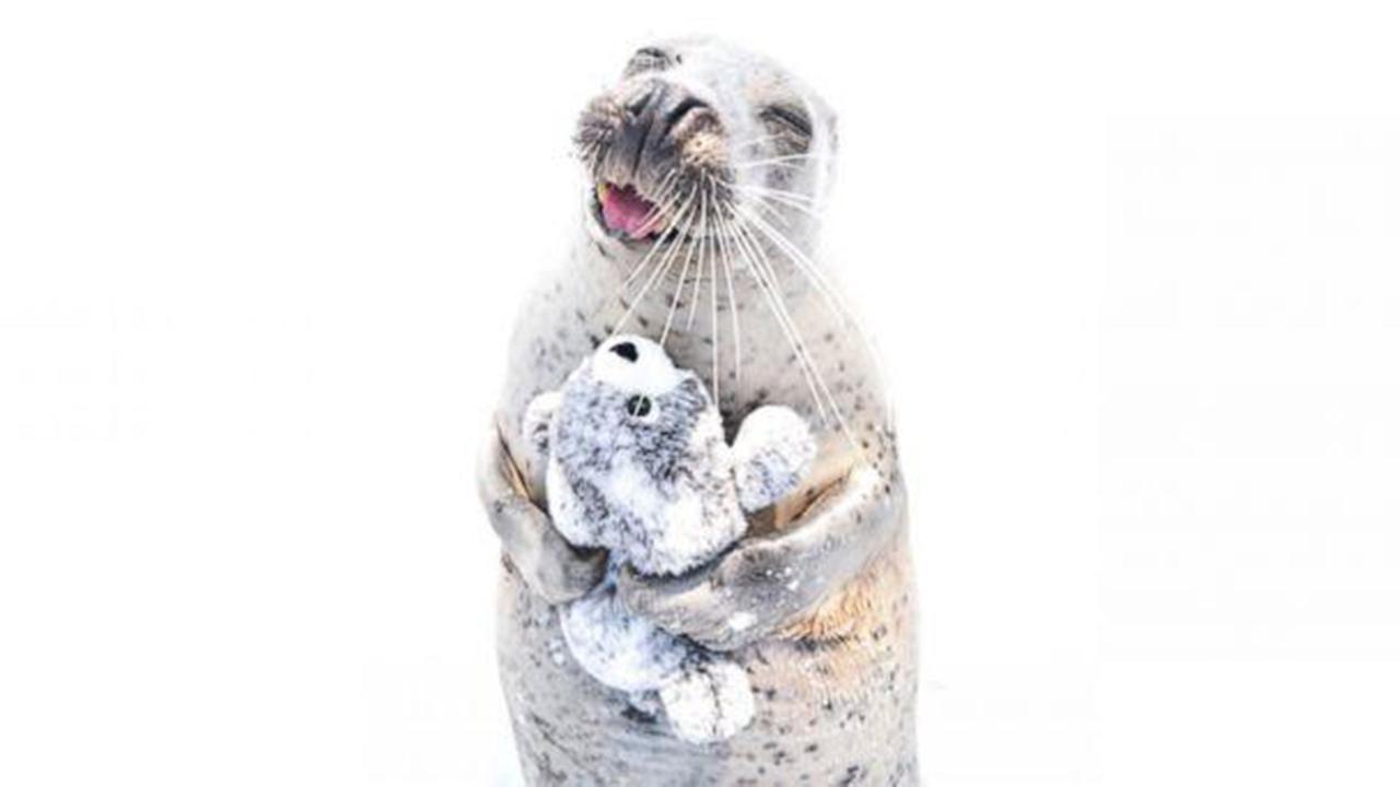 Seal in Japan falls in love with stuffed animal lookalike