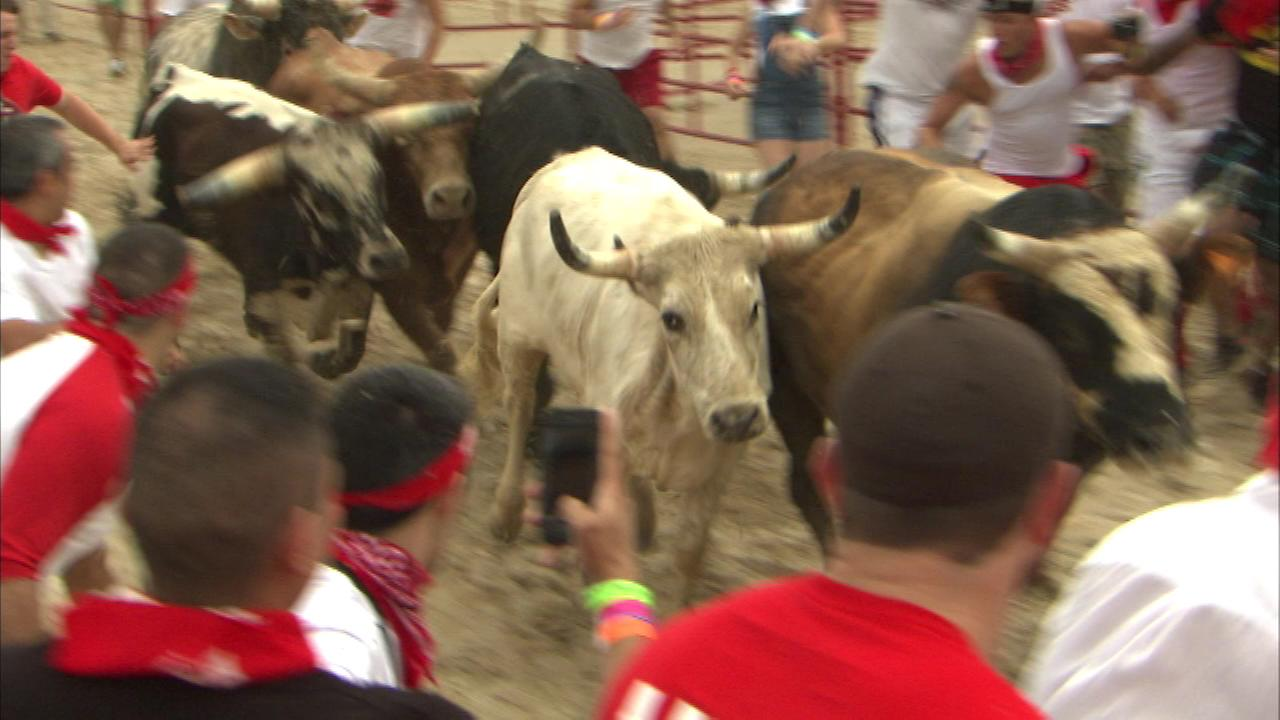The Great Bull Run took place Saturday at the Hawthorn Race Course in Cicero.