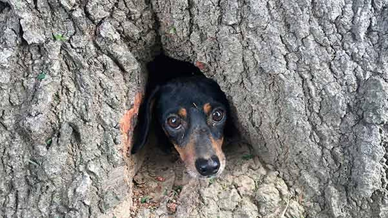 Off duty KSP troopers rescue dog trapped inside tree