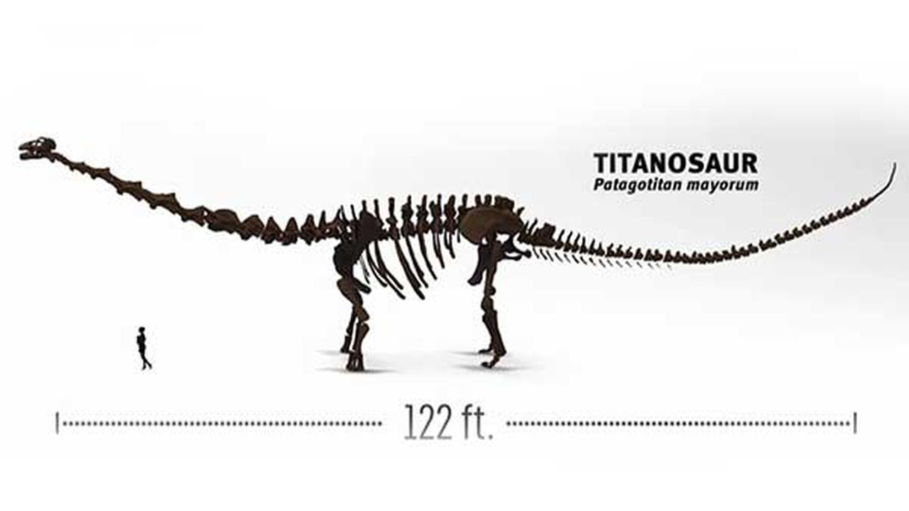 A Look at the Field Museum's New Biggest Dinosaur