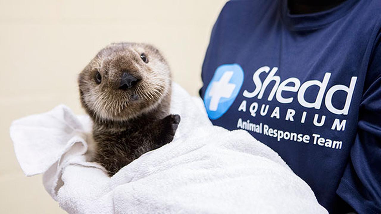 Shedd Aquarium/Brenna Hernandez