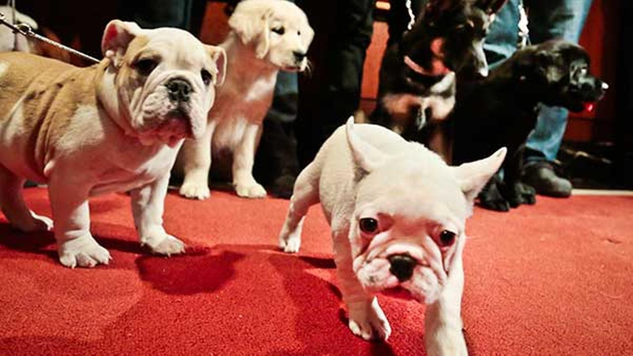 Company Offers 'Puppy Parental Leave' For New Owners