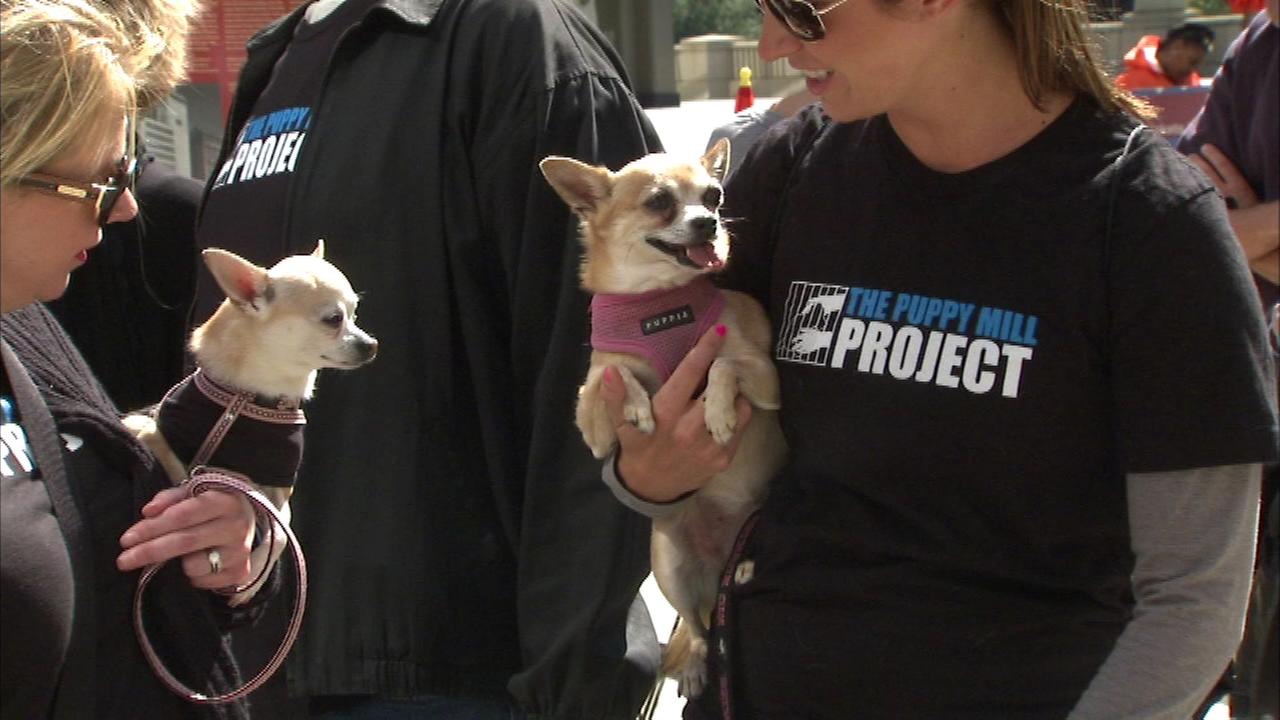 About 200 people and their pets gathered Sunday to raise awareness about puppy mills.