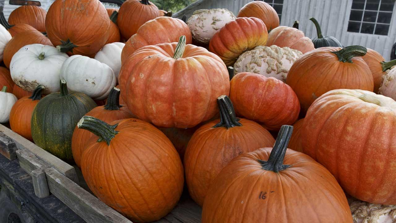 (FILE) Pumpkins at a family farm.