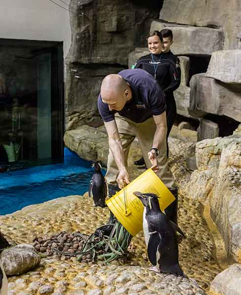 <div class='meta'><div class='origin-logo' data-origin='WLS'></div><span class='caption-text' data-credit='Shedd Aquarium/Brenna Hernandez'>A Shedd Aquarium trainer lays out rocks and sticks the Magellanic and rockhopper penguins will use to make nests ahead of mating season.</span></div>
