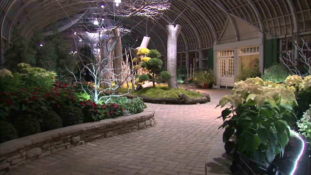 A holiday flower show called Silver Linings is getting ready to bloom at the Garfield Park Conservatory.
