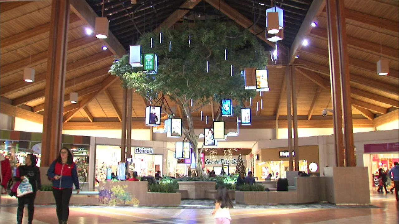 An ordinary ficus has been transformed for the holidays into a digi-tree in the center court of Louis Joliet Mall in Joliet.