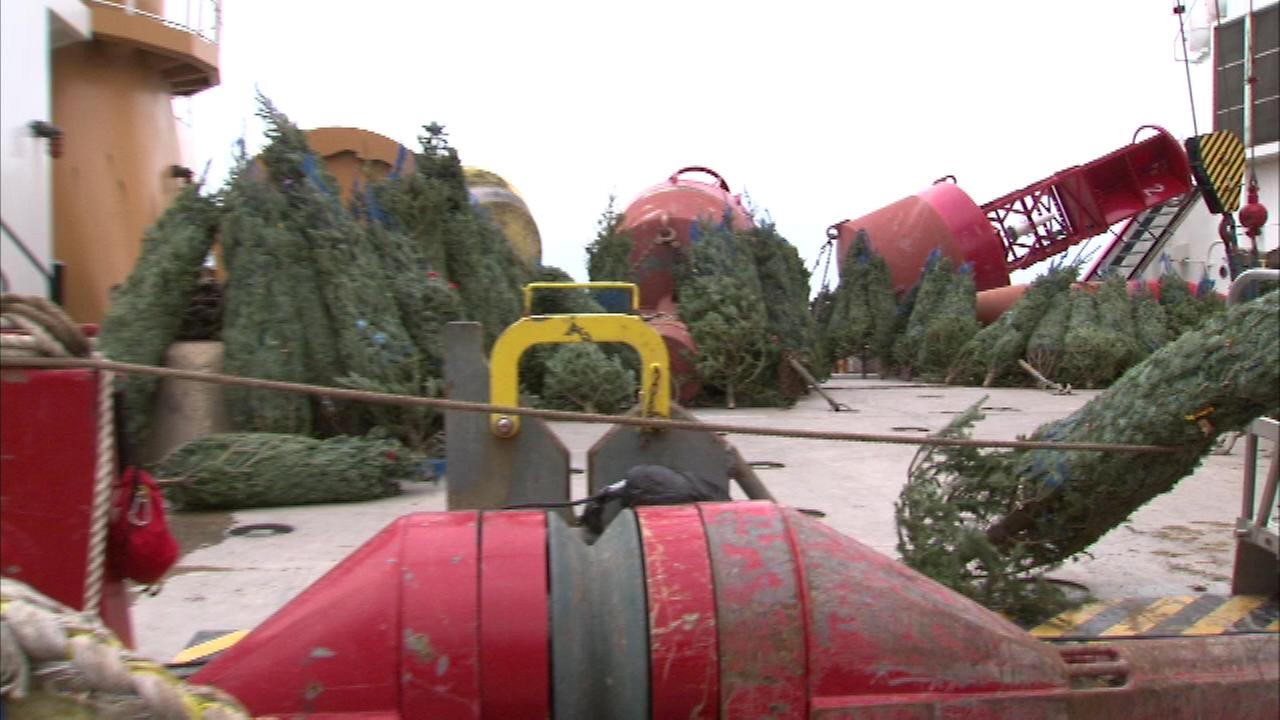 The Coast Guard cutter Mackinaw made its annual sail to Chicagos Navy Pier loaded with more than 1,200 Christmas trees.