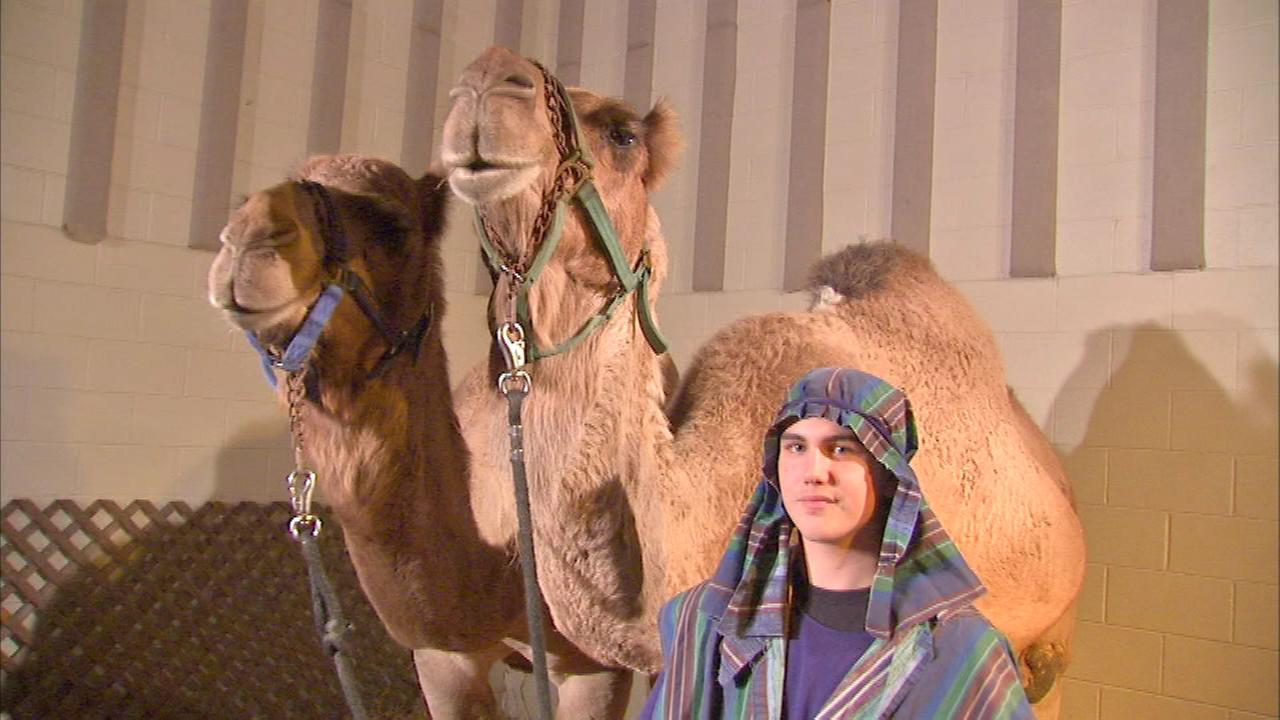 A sold out show in suburban Norridge features 175 people, a camel, sheep and a donkey, as the Salvation Army is staging a live nativity this weekend.