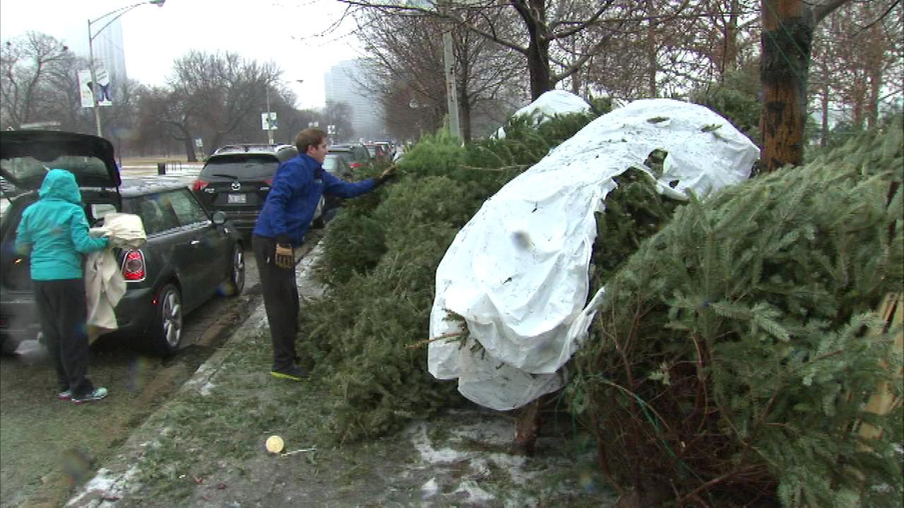 The Chicago Department of Streets and Sanitation began recycling old Christmas trees at 23 locations across the city on Saturday.