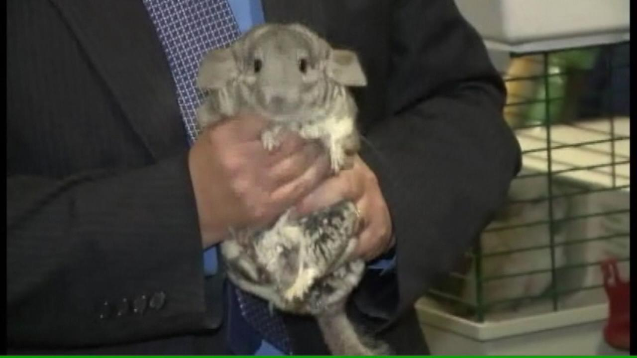 chinchillas waukesha