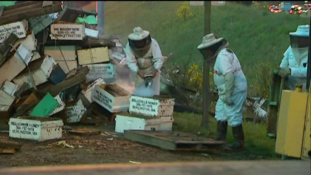 Interstate 5 abuzz with millions of bees after semi tips over