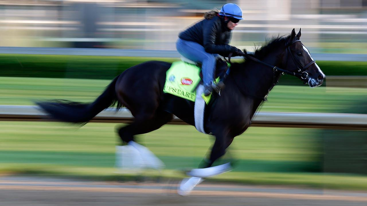 Exercise rider Vicki King takes Kentucky Derby entrant Upstart for a morning workout for the 141th running of the Kentucky Derby horse race at Churchill Downs on May 1, 2015.AP Photo/Charlie Riedel