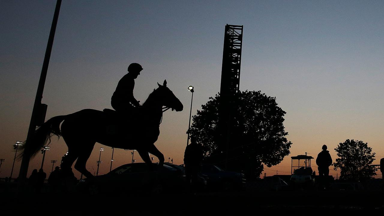 A horse is taken out for a morning workout at Churchill Downs on May 1, 2015, in Louisville, Ky.AP Photo/Darron Cummings