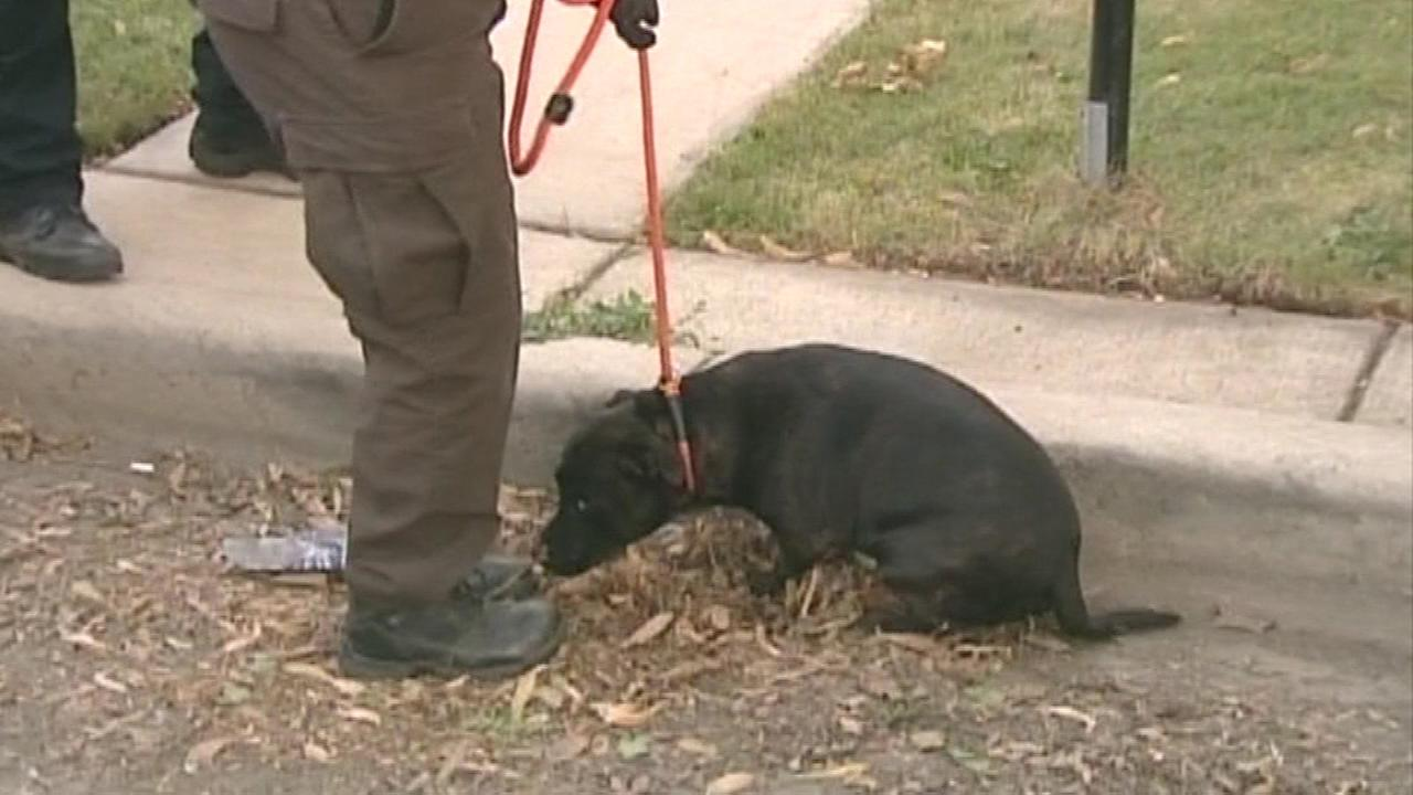 Authorities removed several dogs from a home in Chicagos Dunning neighborhood on Monday night.