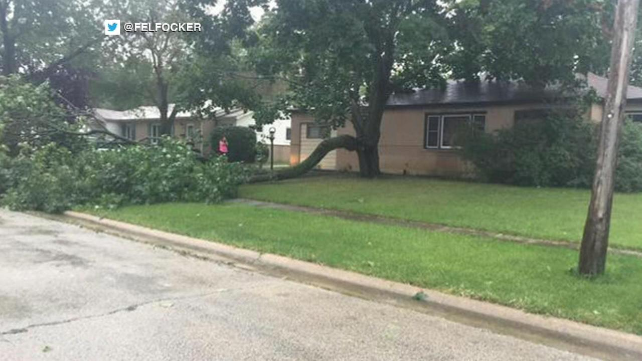 A line of quick-moving storms downed a tree in Hoffman Estates.