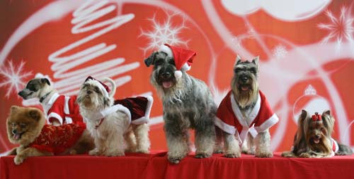 <div class='meta'><div class='origin-logo' data-origin='none'></div><span class='caption-text' data-credit='AP Photo/Aaron Favila'>Dogs dressed in Santa Claus outfits pose during a fundraising event in suburban Manila, Philippines.</span></div>