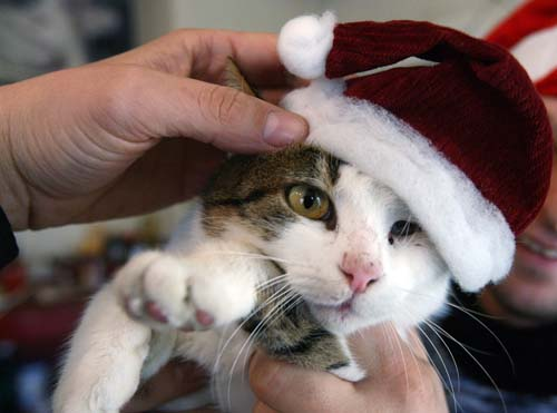 <div class='meta'><div class='origin-logo' data-origin='none'></div><span class='caption-text' data-credit='AP Photo/Petar Petrov'>A man holds a cat with a Christmas hat for an after-Christmas sales at an animal shop in the Bulgarian capital Sofia.</span></div>