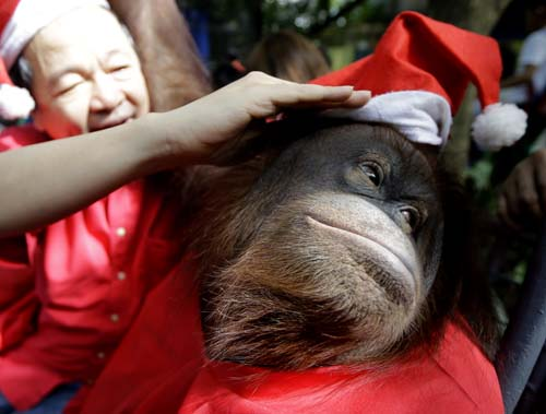 <div class='meta'><div class='origin-logo' data-origin='none'></div><span class='caption-text' data-credit='AP Photo/Bullit Marquez'>Zoo owner Manny Tangco adjusts the Santa hat of an Orangutan named &#34;Pacquiao&#34; while giving school children a tour ahead of a Christmas celebration.</span></div>