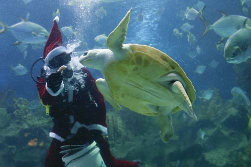 <div class='meta'><div class='origin-logo' data-origin='none'></div><span class='caption-text' data-credit='AP Photo/Vincent Thian'>A diver in Santa costume feeds a turtle as part of the upcoming Christmas celebrations at Aquaria KLCC underwater park in Kuala Lumpur, Malaysia.</span></div>