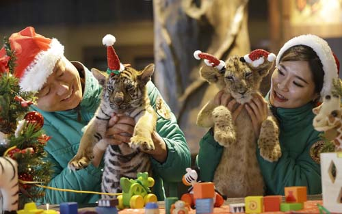 <div class='meta'><div class='origin-logo' data-origin='none'></div><span class='caption-text' data-credit='AP Photo/Ahn Young-joon'>A lion cub named Dominjun, right, and a tiger cub named Jangbori wear Santa Claus caps during an event to celebrate Christmas at the Everland amusement park in Yongin, South Korea.</span></div>